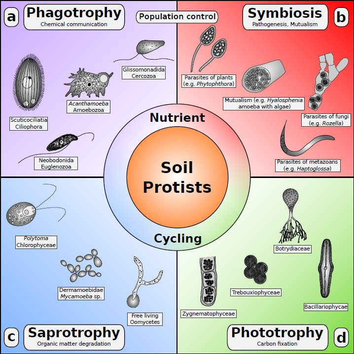New review on soil protists in fems microbiology reviews for Soil king productions