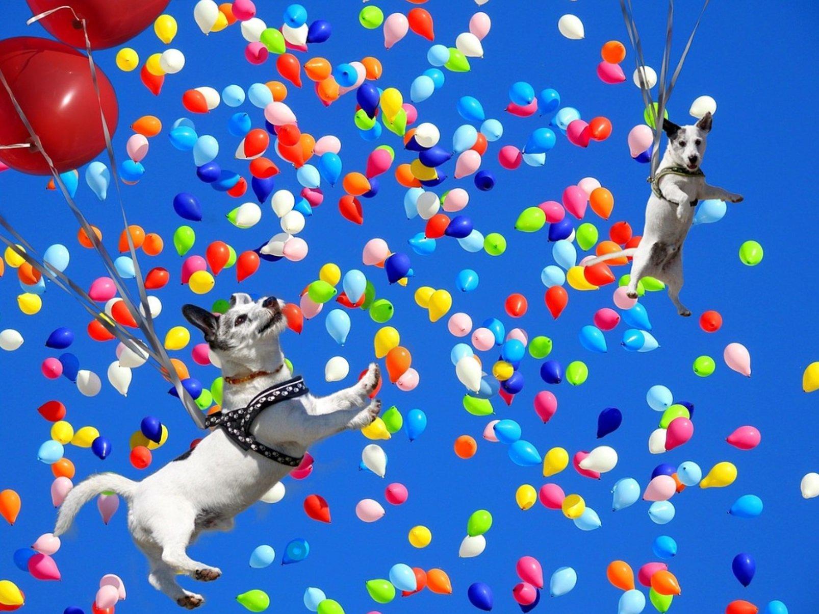 Смешная картинка с шарами, открытка ребенку