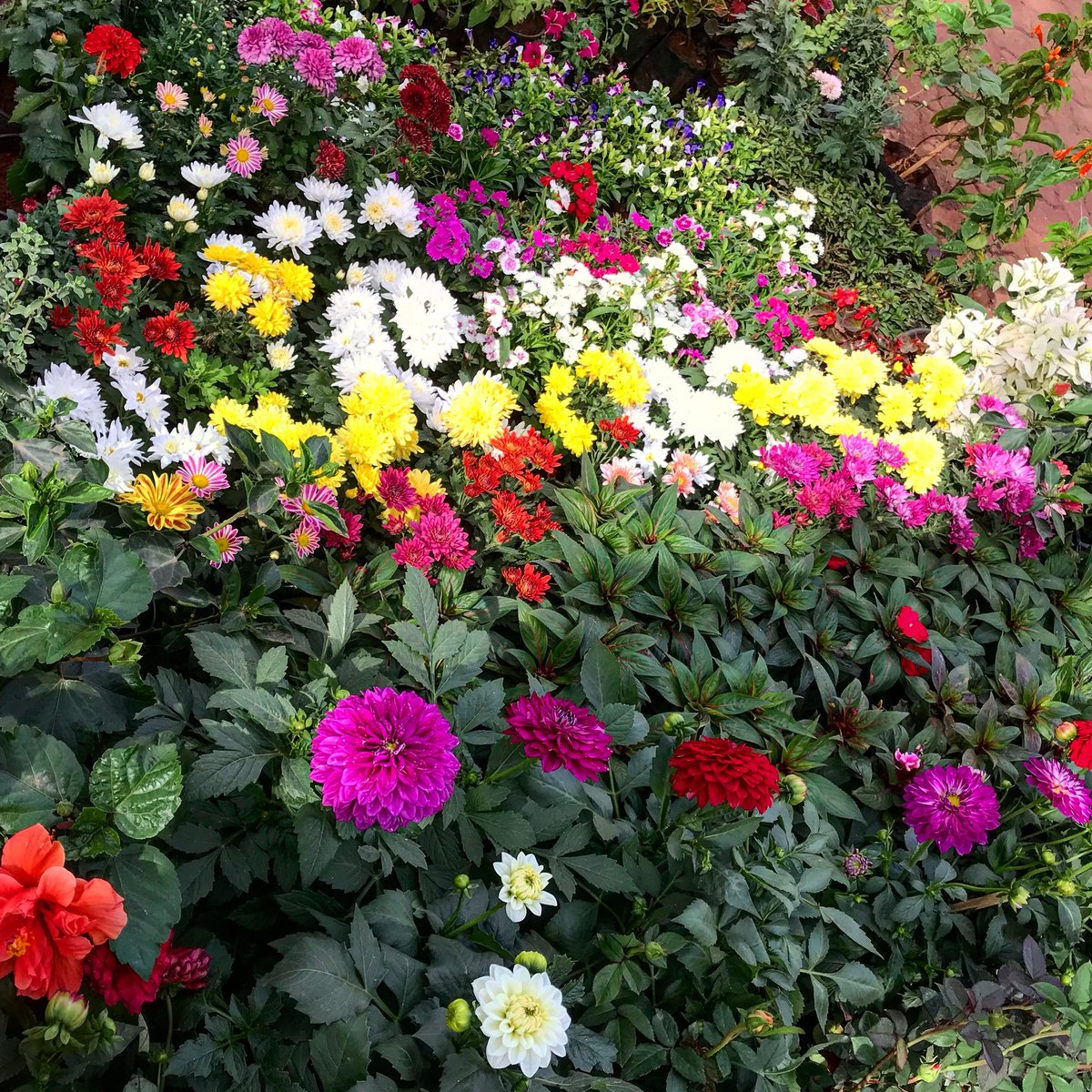 Good Morning Flowers Garden Images