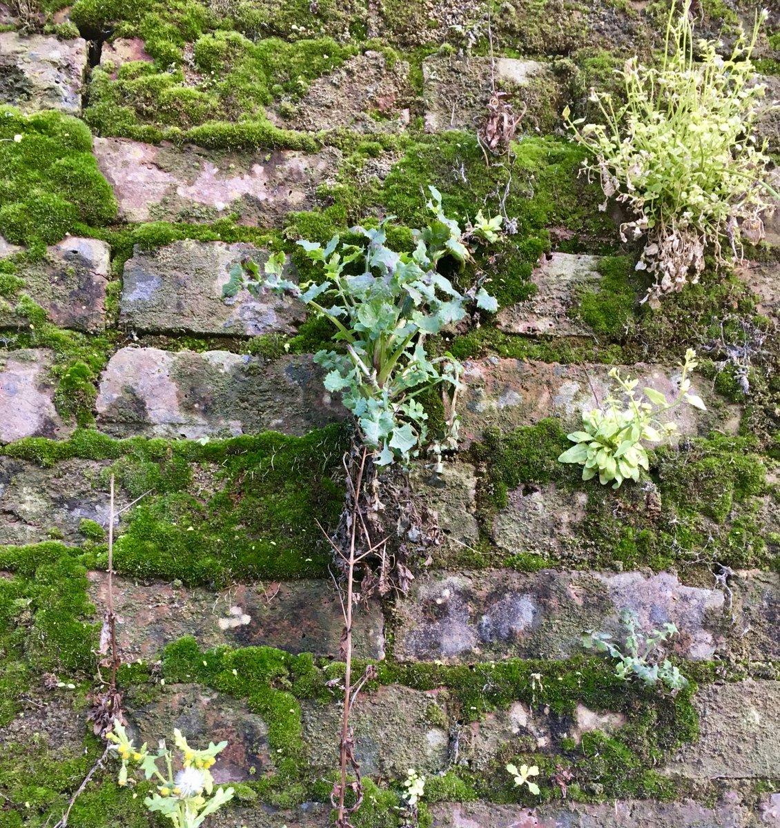 Living wall. No maintenance required... #livingwall #NaturePhotography