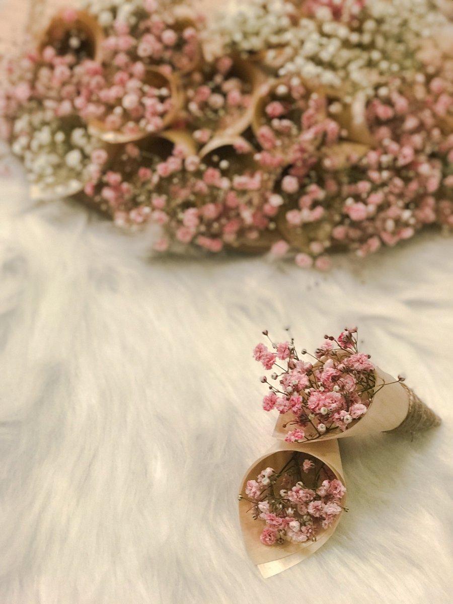 متجر ڤلنتينا Twitterren جيبسوفيليا زهور ورد زهري ابيض تقديمات توزيعات شوكولاته مناسبات توزيعات فرح توزيعات ورد توزيعات زهور مناسبات مناسبه Https T Co Bg1qrhlrkh