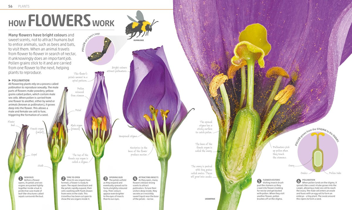 Strong Scented Flower Of The Iris Family Flowers Healthy