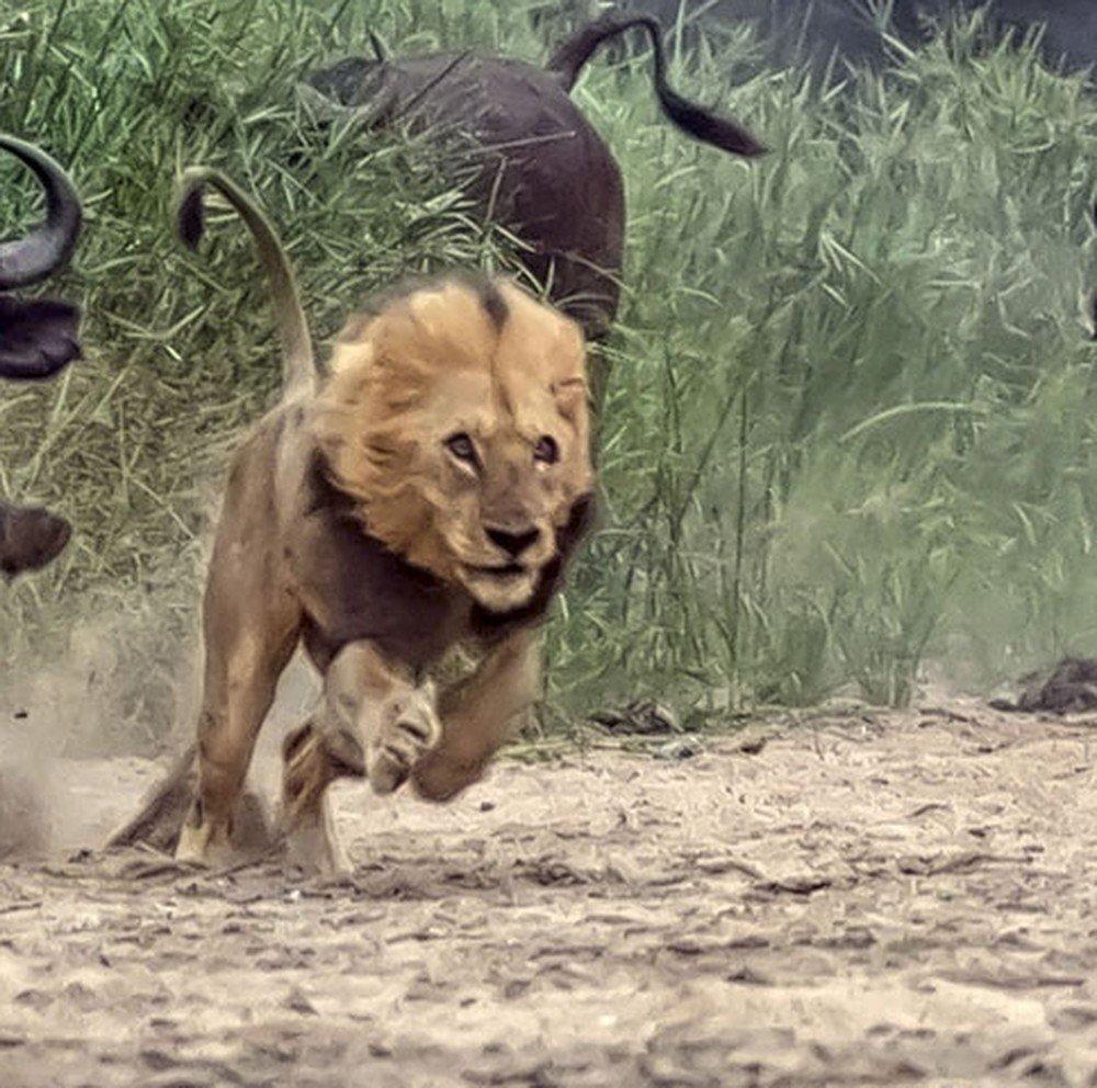 Leões devoram suspeito de ser caçador e deixam só a cabeça na África do Sul https://t.co/3EfHUYuBh3 #G1