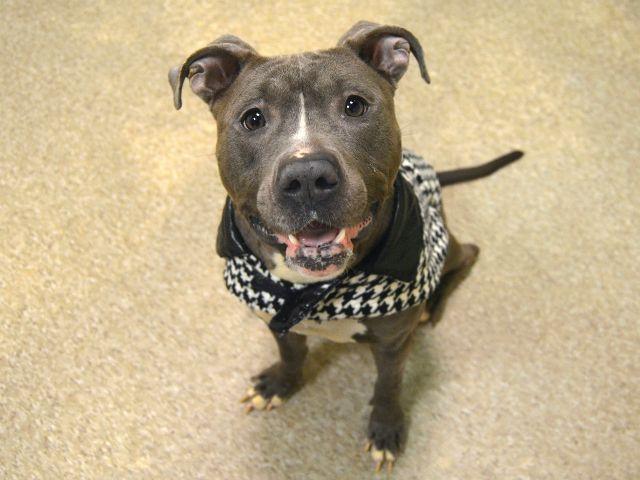 Urgent Death Row Dog's photo on Sasha