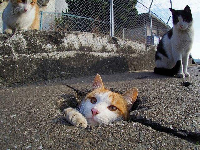 タイムマシーンに乗ったものの、時空の出口の座標軸設定を間違ってしまった猫さん達。