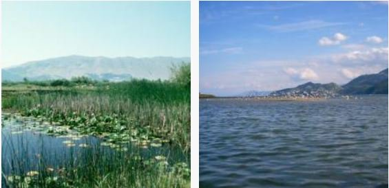 Working towards enhancing the conservation of coastal #wetlands in the #Mediterranean with our partners.