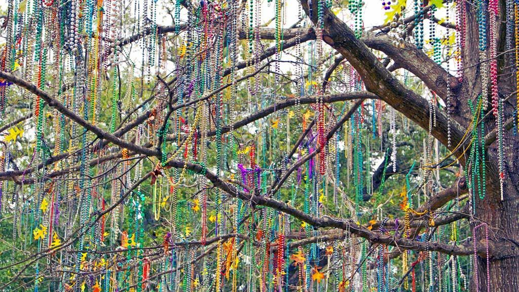 Mardi Gras Trees are in bloom!🎉 #FatTues...