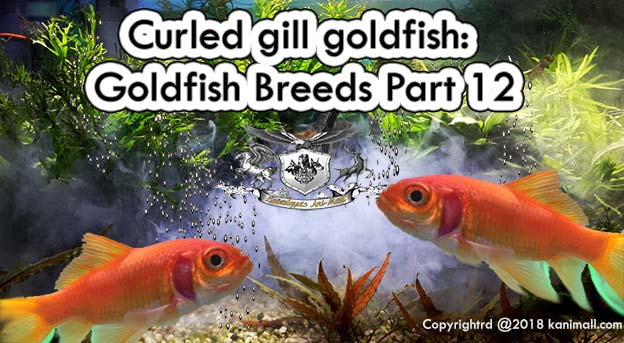 #goldfishes hashtag on Twitter