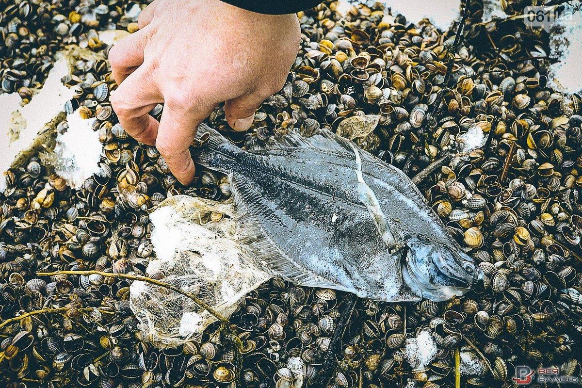 были строителями рыбы азовского моря названия и фото цетрин