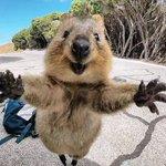 可愛すぎかよずっと笑顔に見える動物クァッカワラビーが可愛すぎるw