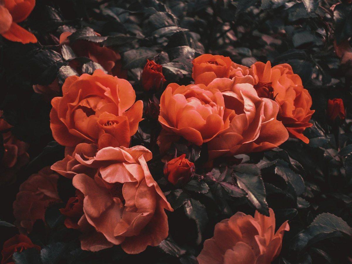 Aesthetics Etc On Twitter Peach Black Girl Jeans Rose