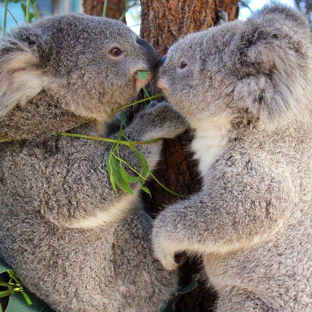 Koala Ty Latest News Breaking Headlines And Top Stories Photos