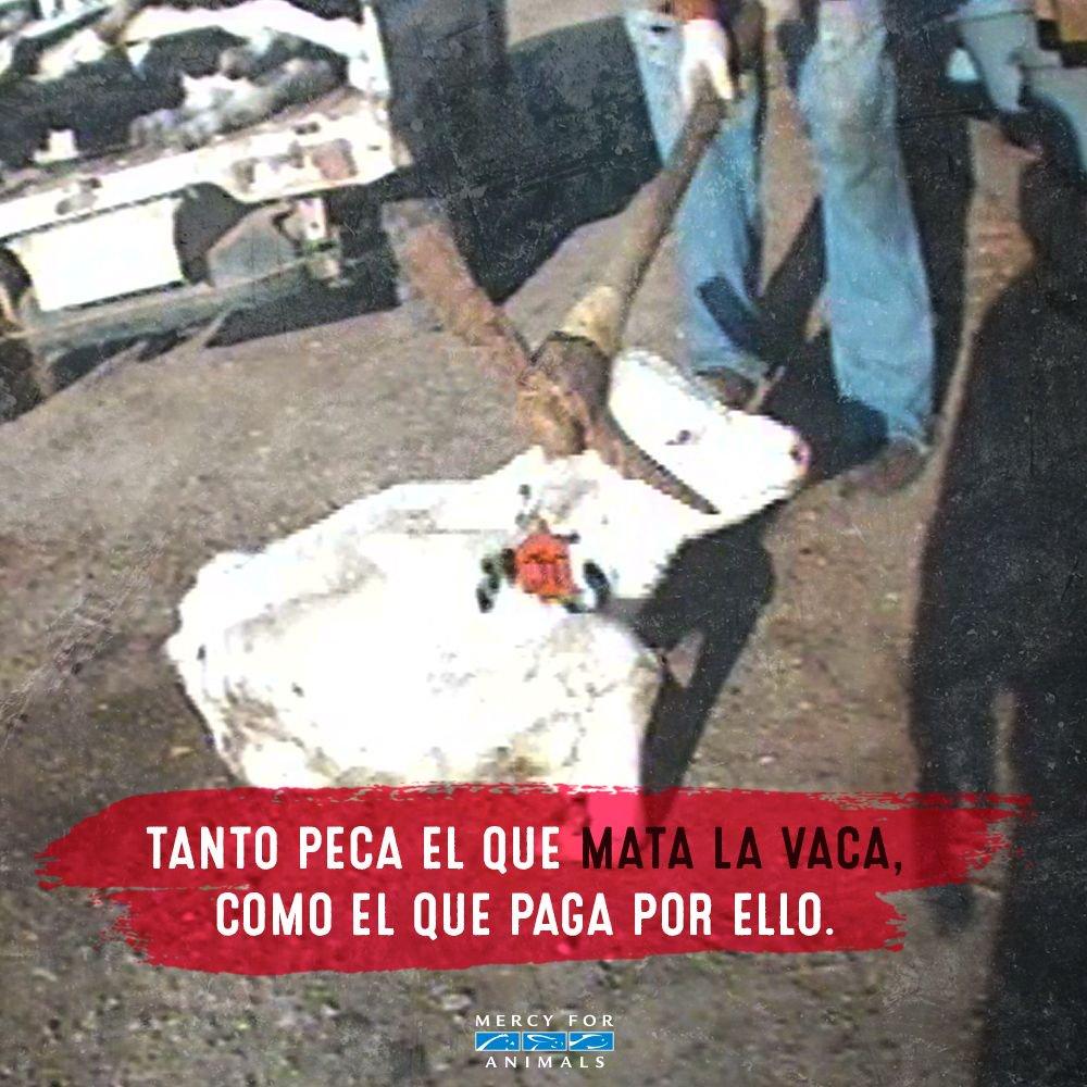 ¡No contribuyas más a esta crueldad! 😢 h...