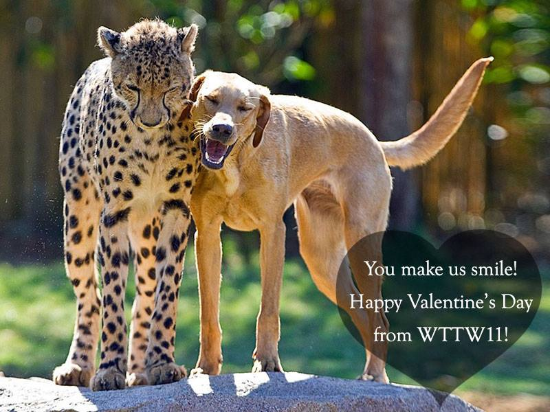 Wttw Chicago Pbs On Twitter Thanks For Being Our Valentine And