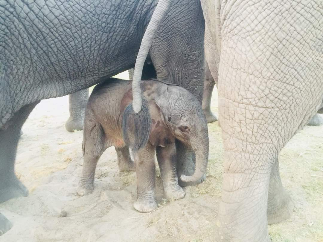 RT WeAreWilderness: See more pics of abu_camp's adorable little tyke  https://www.wilderness-safaris.com/blog/safari-albums#gallery-2479_New+Addition+to+the+Abu+Herd … #babyele #elephantconservation #OurJourneysChangeLivespic.twitter.com/BSDP6DYKHQ