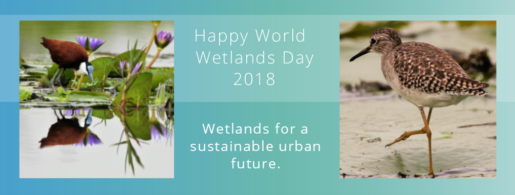 Happy #WorldWetlandsDay everyone!   Urban #wetlands make our cities more liveable.   DYK: There are over 2000 @RamsarConv #wetland Sites which are NB for the conservation of global #biodiversity & sustaining human life through the benefits we derive from them.