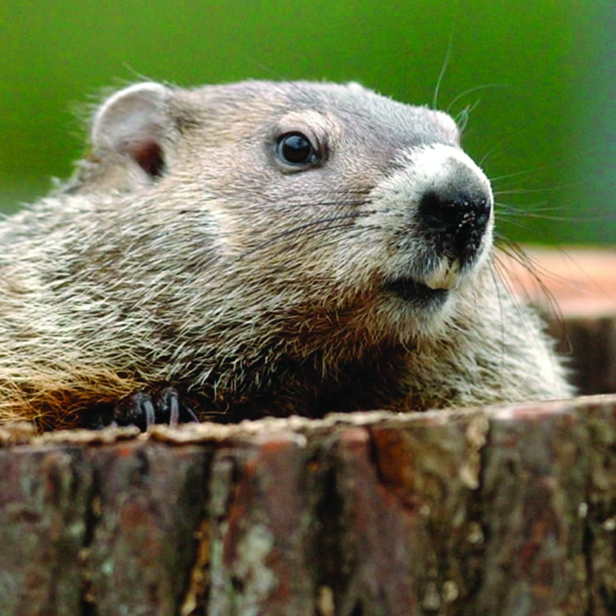 Groundhog Day Movie Quotes Scoutshop Hashtag On Twitter