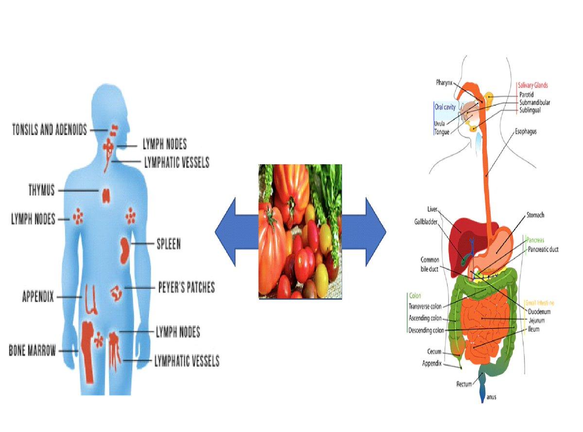 read Kallikrein related peptidases 2012