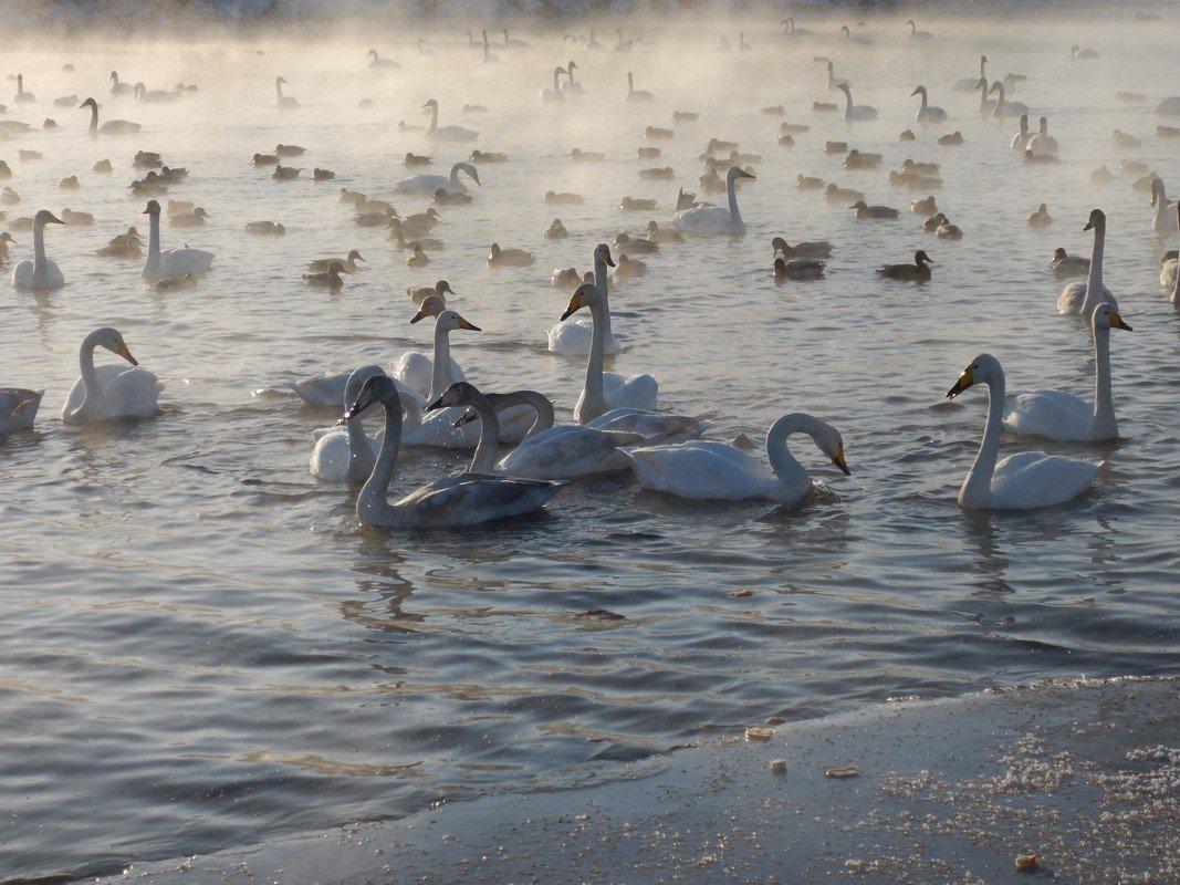 Открытки доброе, алтайский край картинки с района советского на озере где лебеди