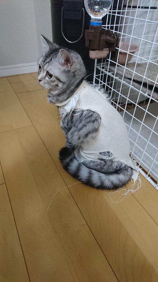 避妊 手術 猫