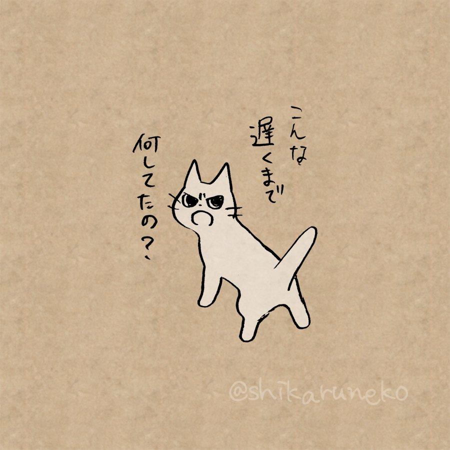 あなたの飼い猫も実は心配している?寄り道で帰りが遅くなった人を怒る猫