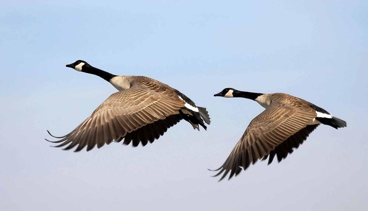 22f372e84d2 Canada Goose : Latest News, Breaking News Headlines | Scoopnest