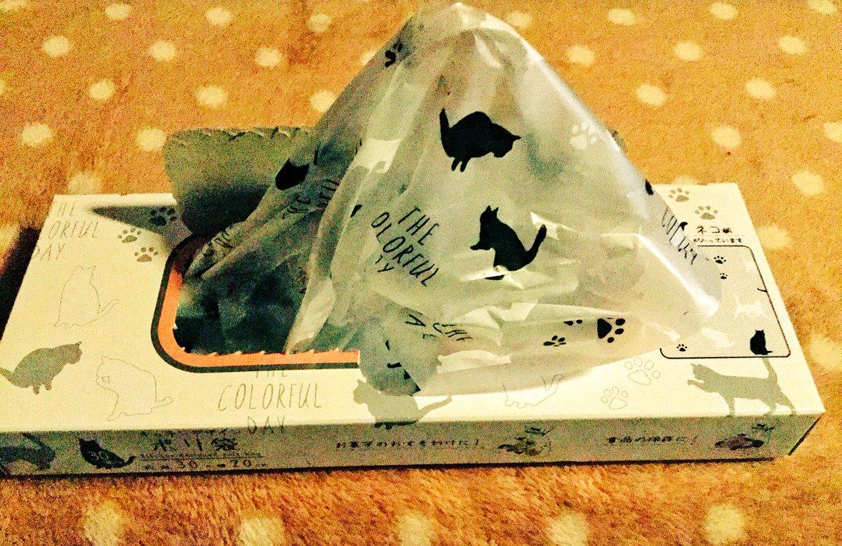 test ツイッターメディア - 黒猫のポリ袋も可愛い?  #セリア #ネコ柄ポリ袋 https://t.co/xqEPQwhOWt