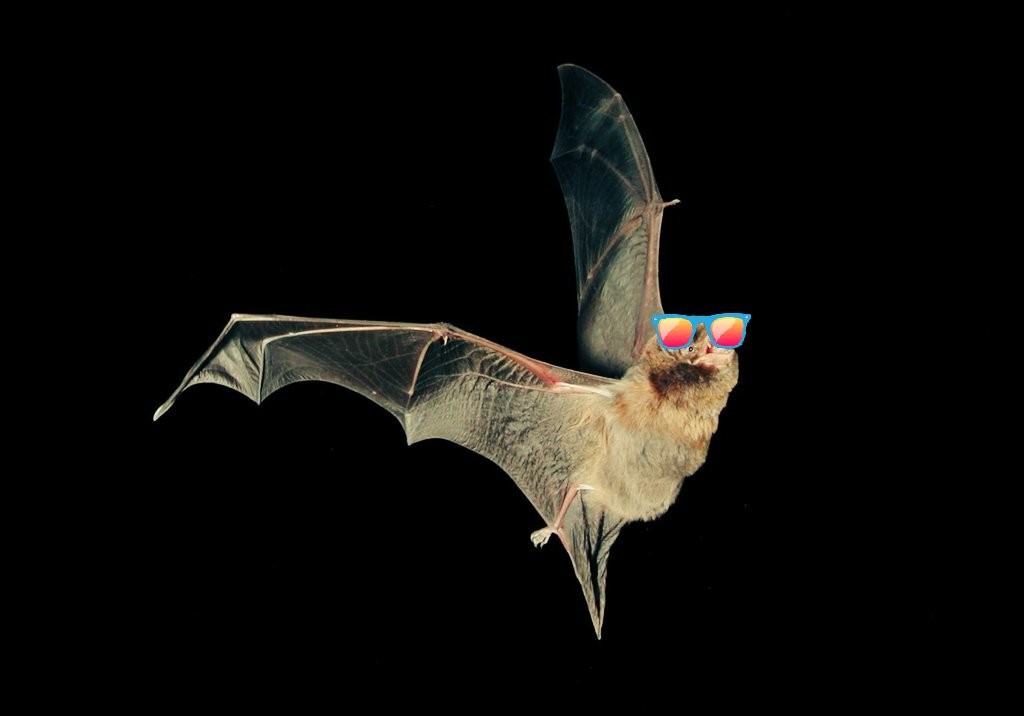 Sciency Soup On Twitter It S A Common Thought That Bats Are Blind