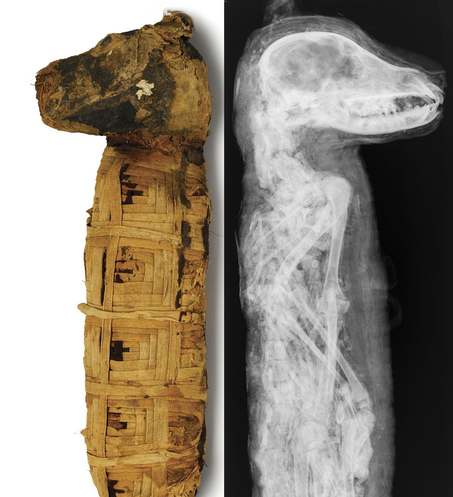 a look at the ancient practice of mummification in egypt They believed that the dead went to an afterlife and would need to look the a mummy is explain why ancient egyptians titled ancient egypt's mummies.