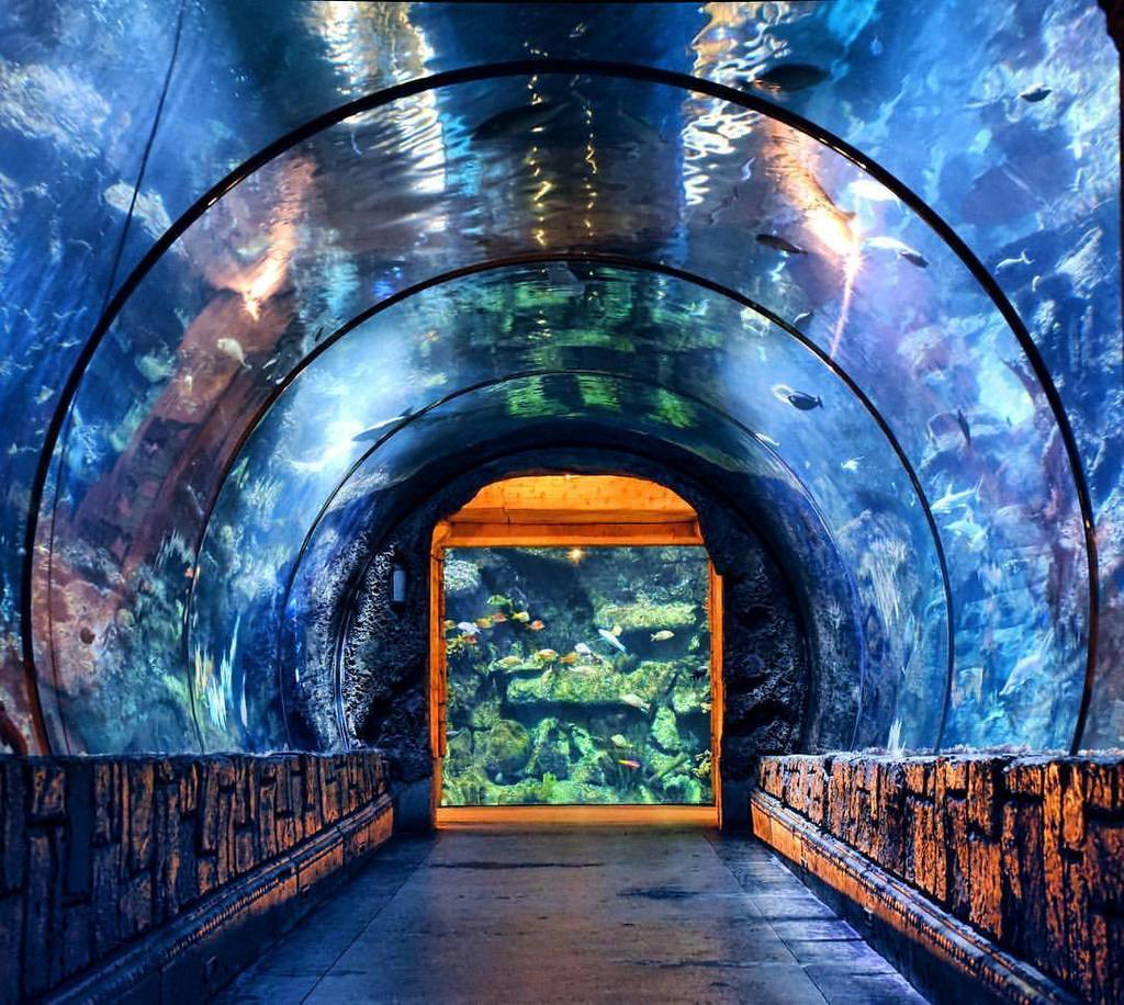 Shark Aquarium Vegas