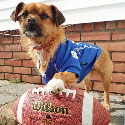 Anime Blues Con on Twitter: #Sports #PAWSplay: Eli Manning and the