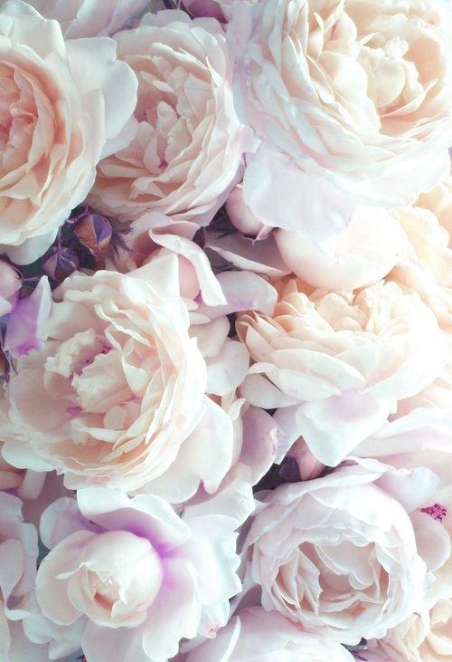 Tumblr Iphone Wallpaper Floral 17703 Loadtve