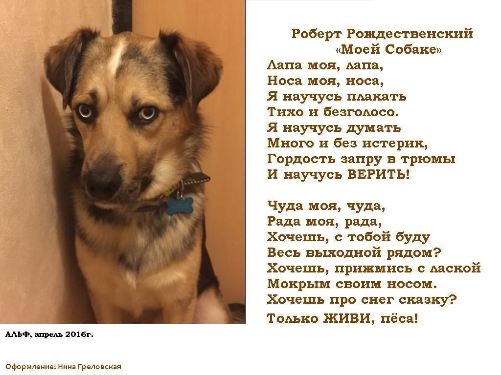 теленовелле она стихи для собаки любимой этой