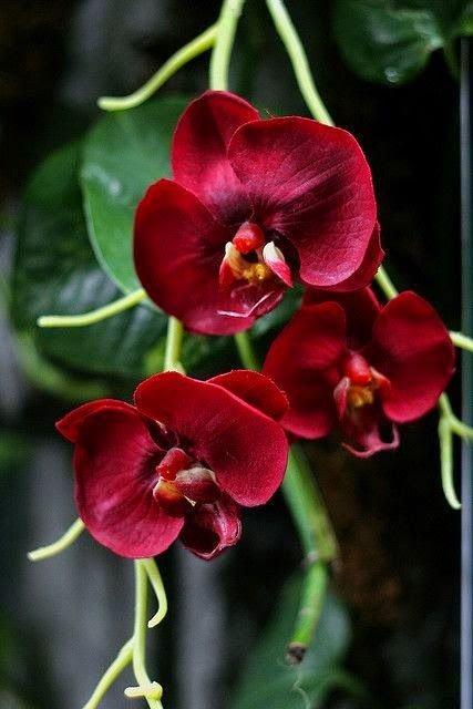 Orchideen hashtag on twitter 0 replies 0 retweets 6 likes altavistaventures Images