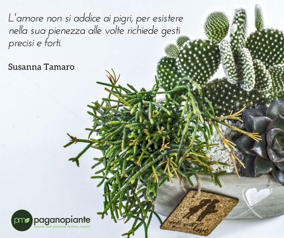 #Amare vuol dire avere il coraggio di essere forti sempre, come le #piantesucculente, che resistono nonostante il #caldo e il #freddo. #succupentsforlove #SanValentin2018 #love #gardencenter https://t.co/eXh5MYPTTu