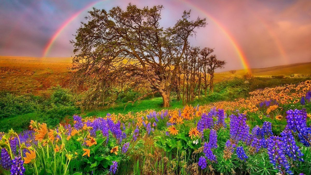 World love flowers on twitter the best post from world love 637 am 4 feb 2018 izmirmasajfo