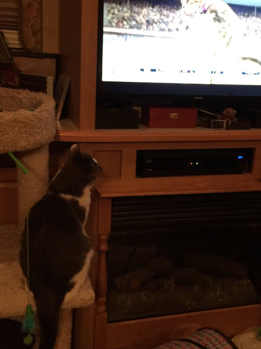 Kitten Bowl TV on Twitter: