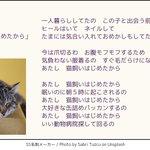 全ての猫好きに捧ぐ替え歌w「あたし猫飼いはじめたから」が良曲すぎる!