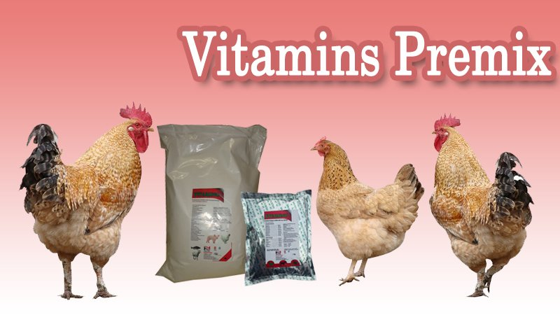 Poultryfeedsupplement tagged Tweets and Download Twitter MP4 Videos
