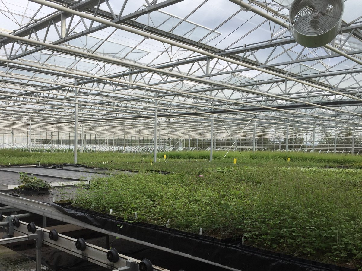 New Leaf Plants On Twitter Nursery Facility Open Day