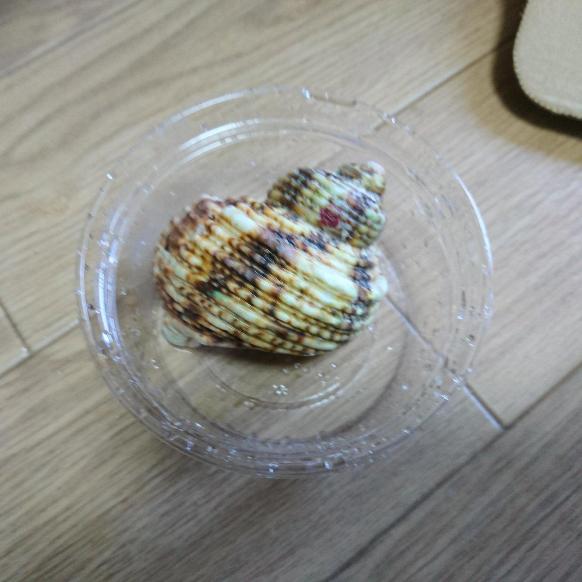 1月のお攫い!  裏側が真珠色の貝殻は、サンポールで表面溶かしてペーパーで磨くと全部真珠色になる!  #軽い気持ちで作ったら思った以上に反響があった物