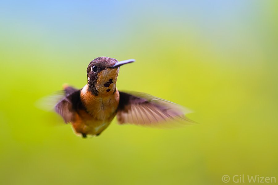 why am i so flighty