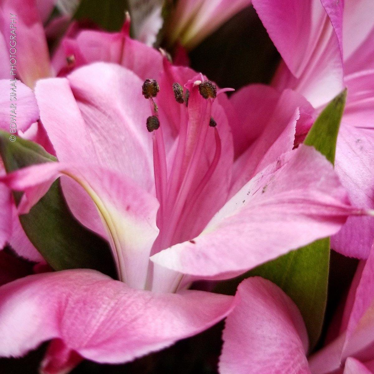 Edwar simal on twitter colors of nature flowers edwar simal on twitter colors of nature flowers vivelaflorida vivelaflorida southbeach miamibeach miami florida photooftheday picoftheday izmirmasajfo