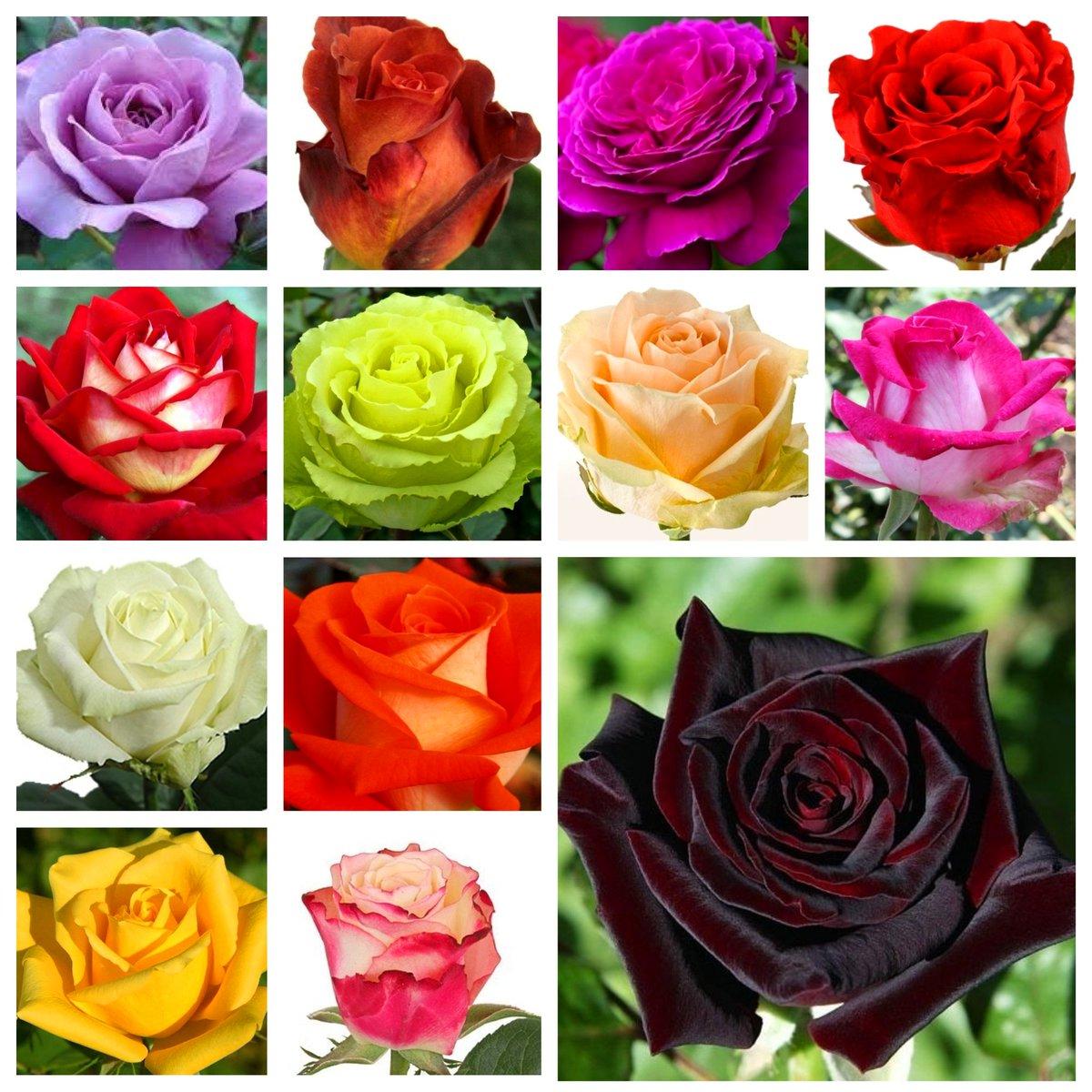 Наименование розы с картинками