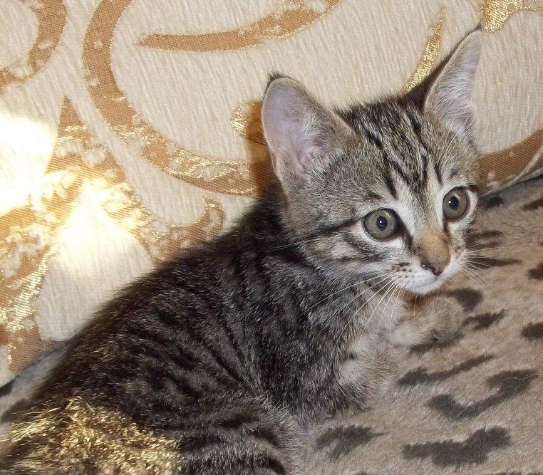 фото серых и полосатых котят сделаны