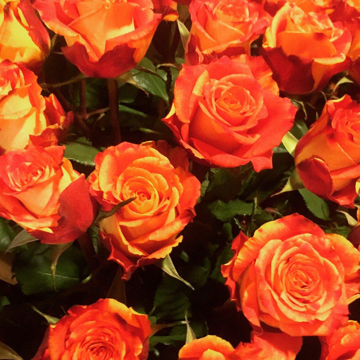 Orfeo Tauwnaar's photo on #Oranje