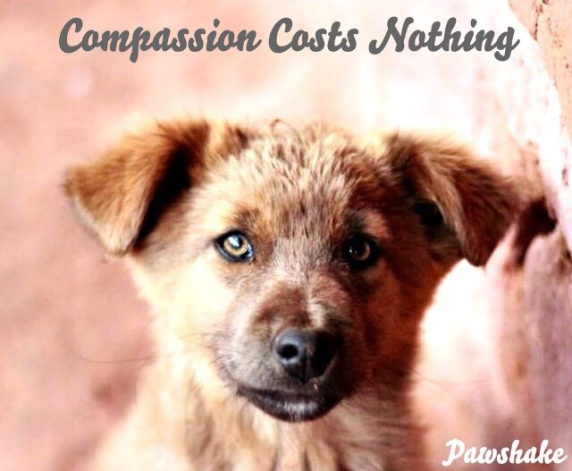 Image result for compassion costs nothing