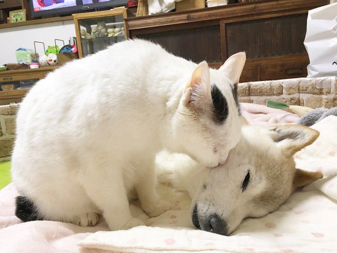 犬にそっとキスする猫!そんな二匹の様子がほっこりしすぎる画像w