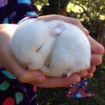 なにこれぬいぐるみみたい!生後11日のウサギがふわふわで癒やされる!