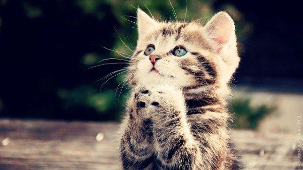 お願い猫 hashtag on Twitter